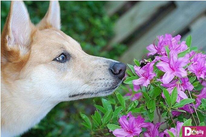 Xử lý tạm thời khi chó bị ong đốt
