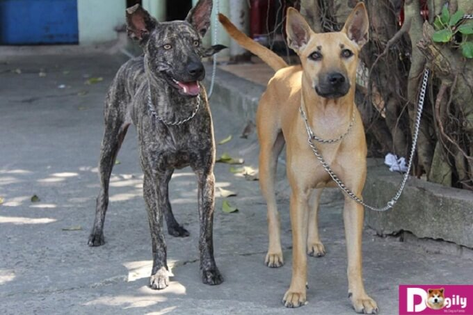 Hãy nhớ tiêm phòng đầy đủ cho cún để tránh những đáng tiếc nhé