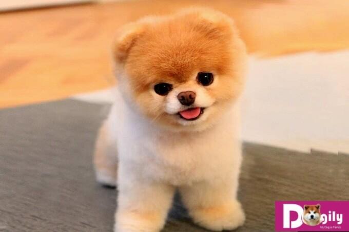 Cách đặt tên cho cún cưng hay và dễ thương