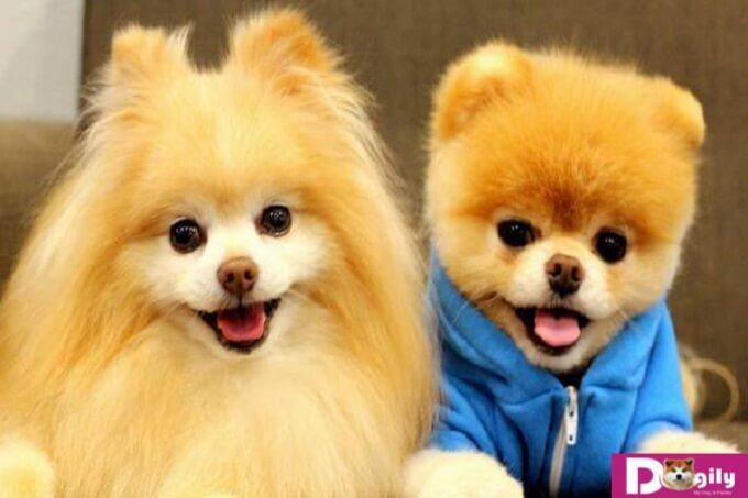 Kinh nghiệm chọn nuôi chó theo phong thủy