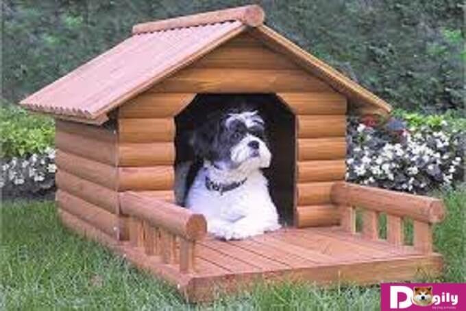 Đừng quên vị trí của chuồng chó cũng rất quan trọng đối với phong thủy đó nha