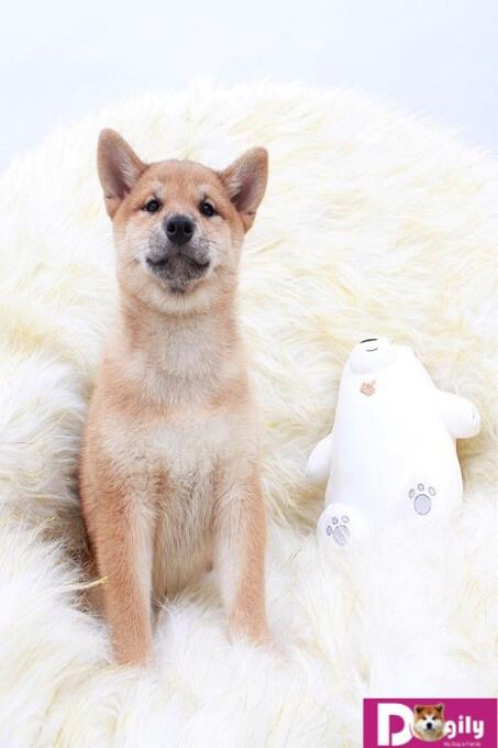 Bạn nên chọn mua chó con thuần chủng từ những nhà nhân giống và những người bán có uy tín.