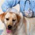 Tiêm phòng cho chó. Giá dịch vụ tiêm phòng vacxin tại nhà của Dogily Vet.
