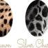 Họa tiết và màu sắc bộ lông mèo Bengal.