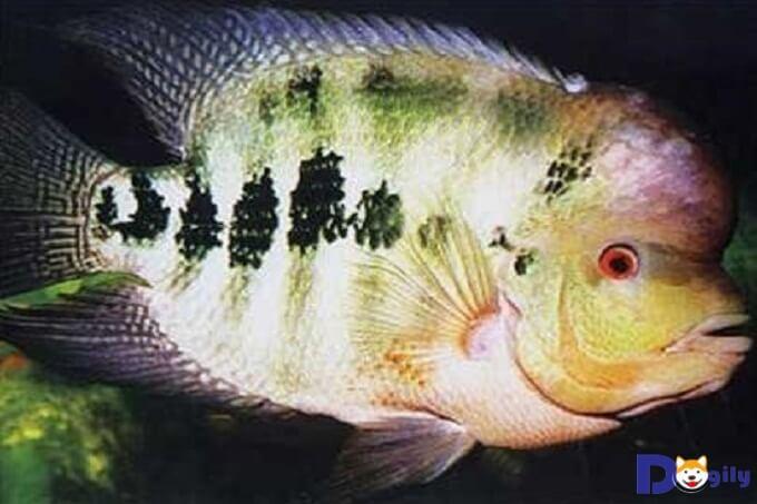 Bể cá tượng trưng cho những người thuộc mệnh Thủy và hợp với người mệnh Kim, mệnh Mộc.