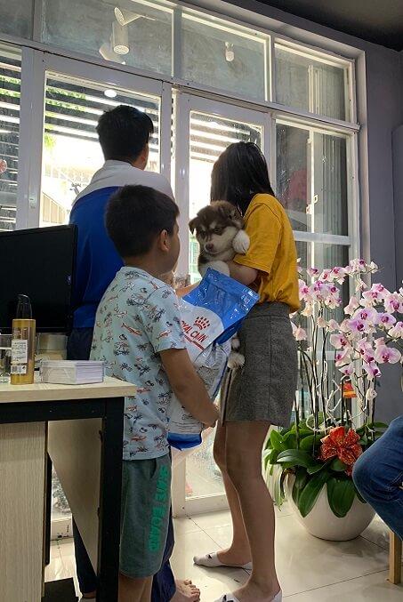 Hình ảnh khách hàng xem và mua chó Alaska trực tiếp tại Dogily Petshop Phú Nhuận (tphcm).