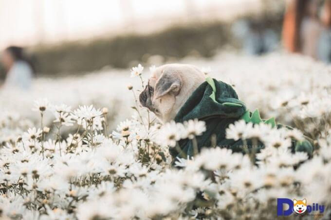 Hoa thơm cỏ lạ có khác. Thơm quá anh chị em ạ.