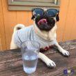 Uống cốc nước mát cho đỡ khát nào.