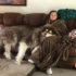 Chó Alaska giant giá bao nhiêu? Địa chỉ mua bán chó giant Alaska malamute tphcm, hà nội?