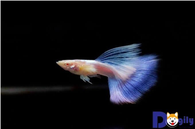 Màu sắc độc đáo tạo nên vẻ ấn tượng của Blue Topaz