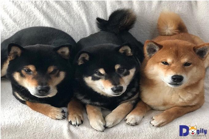 Ba anh em Hinata, Aoi và Sora