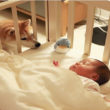 Chú chó Shiba Daifuku có khả năng chăm cô công chúa nhỏ tuyệt vời