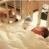 Thu về 400.000 người theo dõi, chú chó Shiba Daifuku nổi tiếng mạng xã hội