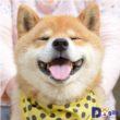 Chú chó mang khuôn mặt nhiều biểu cảm đáng yêu