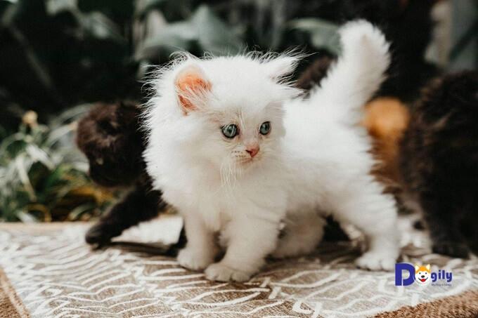 Mèo ALD với nhiều khuyến mại dành cho khách hàng