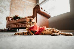 Hình ảnh cực quý tộc của mèo bố Solomon.