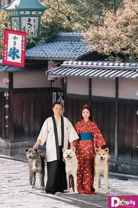 Chó Akita Inu có 3 màu, trắng (white Akita Inu), vện (brindle Akita Inu) và vàng trắng (red Aktia Inu).