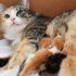 Nên cho mèo con ăn gì vào những tháng đầu