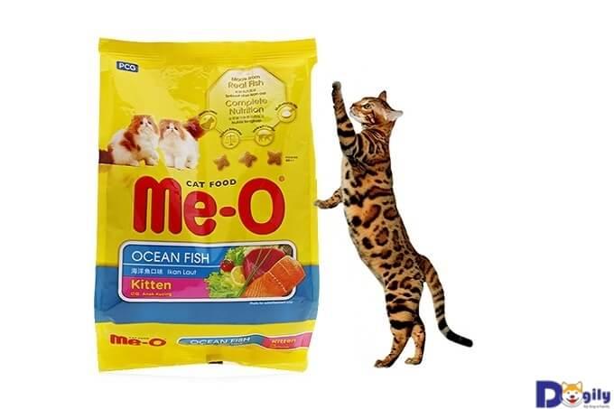 Bạn có thể cho mèo ăn thức ăn sẵn sau giai đoạn ăn dặm