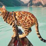 Dogily là đơn vị chuyên phân phối các loại mèo uy tín và chất lượng