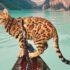 Mèo Bengal giá bao nhiêu và mua ở đâu uy tín và chất lượng nhất?
