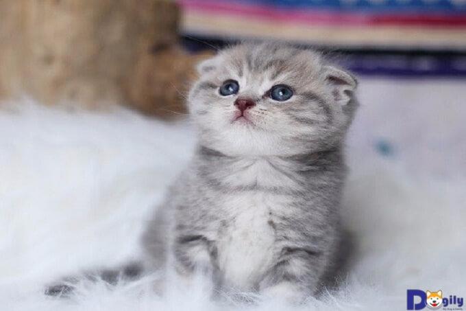 Những chú mèo này rất hiền lành và thân thiện