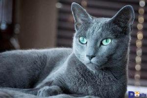 Mức giá các em mèo Nga tại Việt Nam hiện nay không hề rẻ