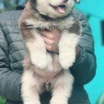 Khi mua chó tại Dogily Petshop đều có hợp đồng mua bán rõ ràng. Quy định chi tiết trách nhiệm từng bên.