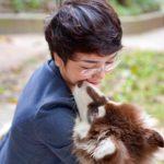 Các bé Alaska tại Dogily đều được chăm chút, yêu thương như thành viên trong gia đình