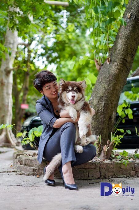 Khi mua chó Alaska tại Dogily Petshop. Chúng tôi bảo hành sức khỏe 45 ngày. Tư vấn chăm sóc trọn đời.