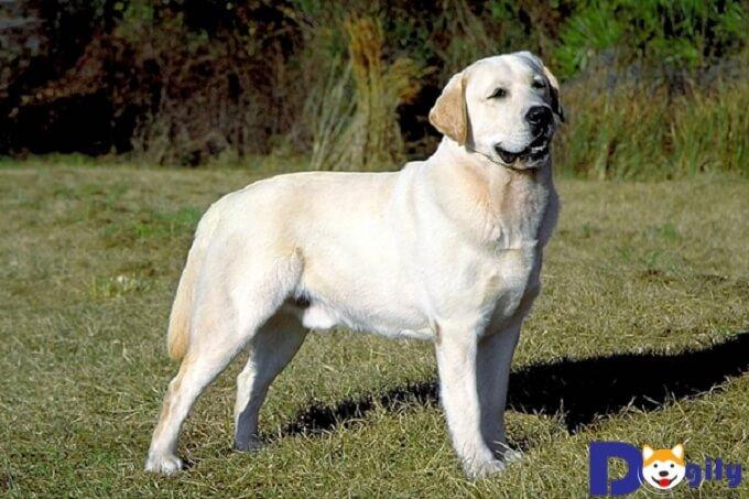Chó không có giấy chứng nhận nguồn gốc thường có giá rẻ