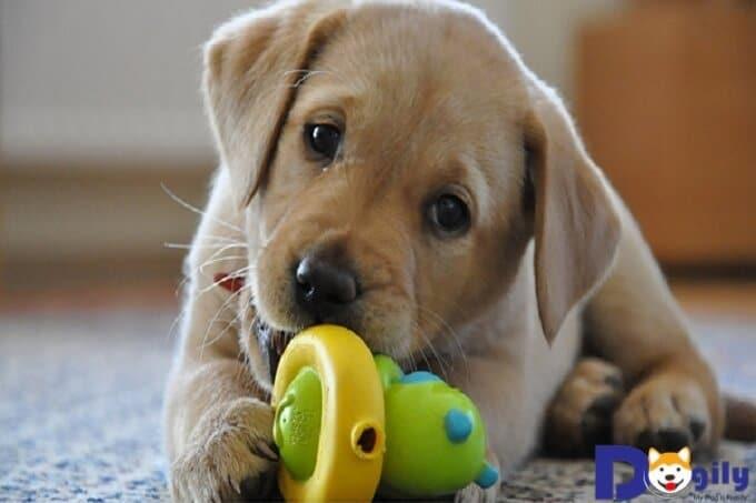 Chú chó lỗi thường không đươc bán với giá cao