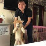 Khách hàng mua liền 3 chú chó Akita Inu của Dogily Petshop tại Tphcm.