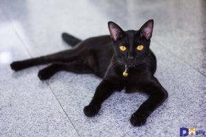 Chăm sóc mèo thường xuyên sẽ giúp chúng sống thọ hơn