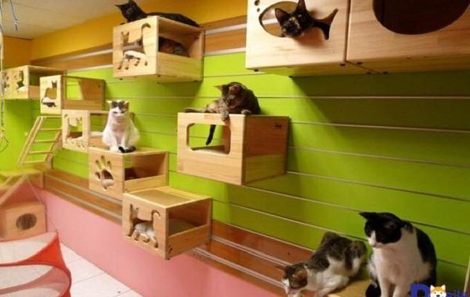 Mua nhà cho mèo phù hợp kích thước