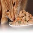 Thức ăn tự chế biến là đảm bảo dinh dưỡng và tốt nhất cho mèo