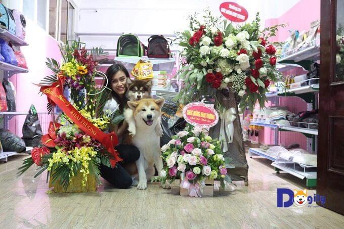 Khách hàng mua chó Alaska tại Dogily Petshop được khuyến mãi gói combo phụ kiện, đồ dùng cho chó trị giá 1 triệu đồng.