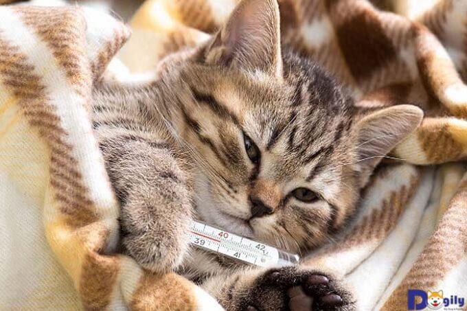 Mèo bị nôn, bỏ ăn, tiêu chảy ra máu kéo dài nên cho uống thuốc gì?