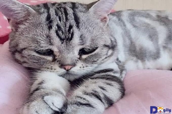 Có rất nhiều nguyên nhân khiến những chú Mèo gặp phải tình trạng như nôn, tiêu chảy ra máu.