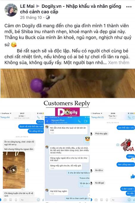 Hình ảnh tổng hợp các phản hồi của khách hàng khi mua chó Shiba Inu tại hệ thống Dogily Petshop