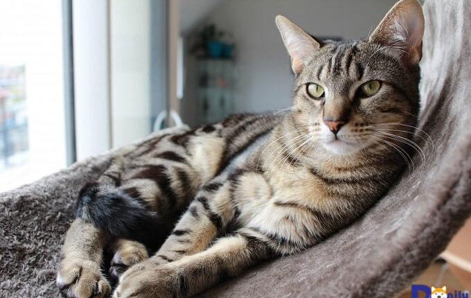 Bạn hãy chuẩn bị ổ mềm mại và sạch sẽ để mèo thư giãn