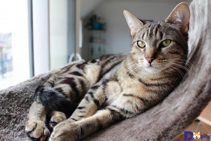 Những lý do bạn nên triệt sản mèo cái