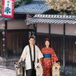 Chó Akita Inu có lịch sử hàng ngàn năm.