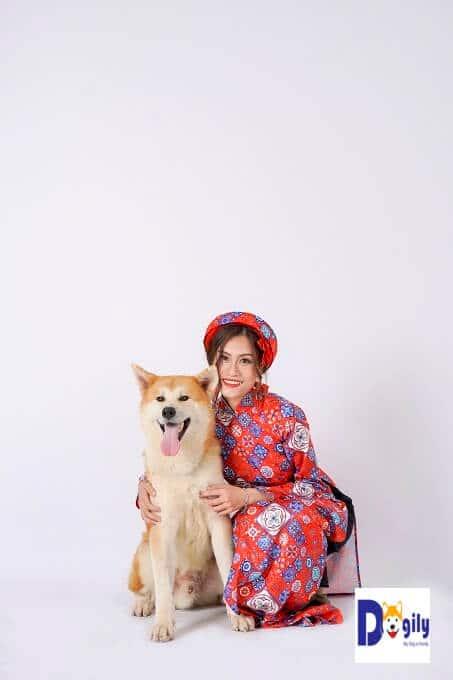 Huấn luyện chó Akita ngồi rất cần thiết. Ví dụ: khi bạn muốn chụp ảnh như này.
