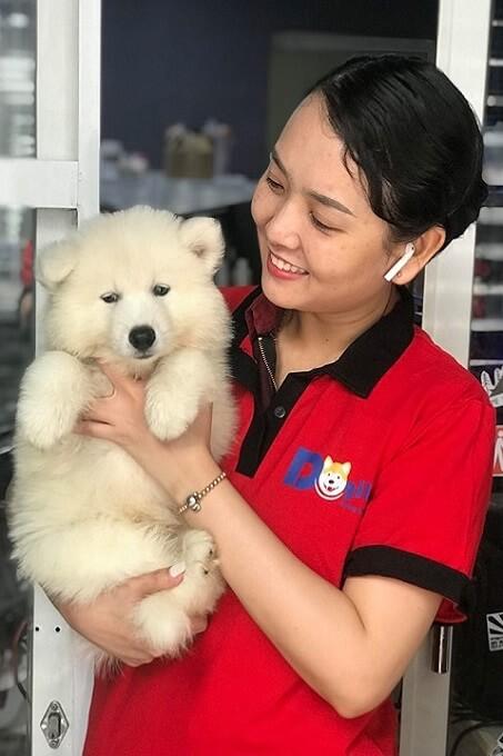 Chó Samoyed thuần chủng sinh ra ở Trang trại Dogily Kennel ở Hà Nội và Tphcm có giá dao động từ 9 tới 12 triệu 1 chú.