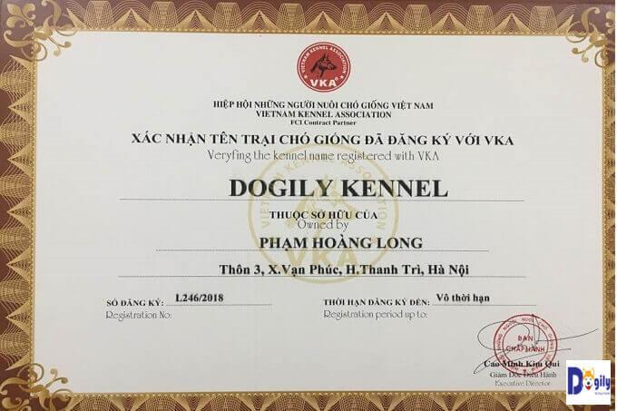 Giấy chứng nhận thành viên VKA (Hiệp hội những nhà nhân giống chó Việt Nam) của Dogily Petshop.