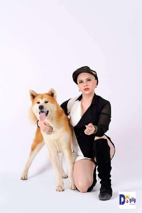 Những điều thú vị có thể bạn chưa biết về giống chó Akita Inu Nhật Bản.