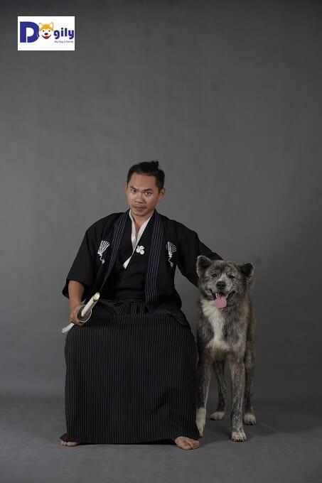 Đặc điểm chó Akita Inu thuần chủng Nhật Bản