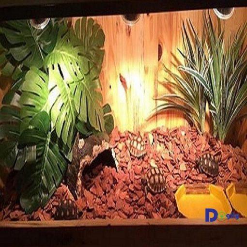 Bể chuyên dụng nuôi rùa cảnh