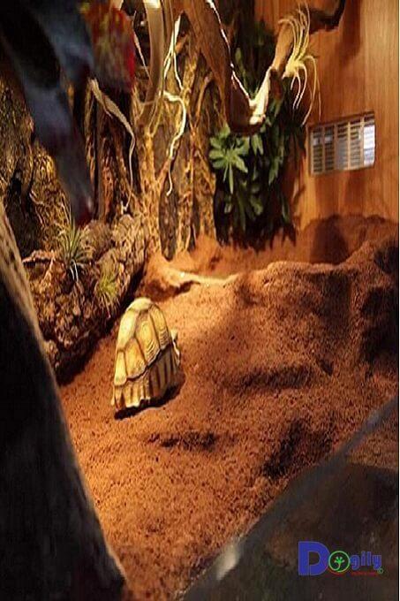 Bể kính dành riêng cho rùa cạn của Dogily petshop